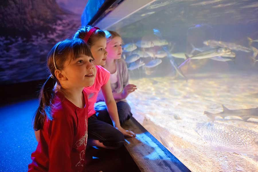 Children looking through the glass of a fish tank at SEA LIFE Kansas City Aquarium at Crown Center in Kansas City, MO
